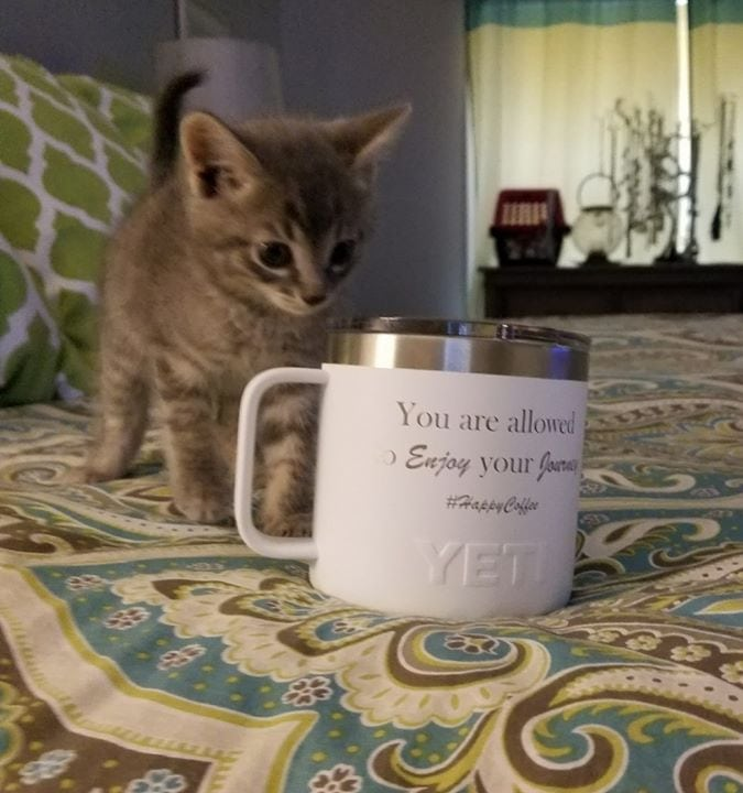 Happy Coffee and a sweet kitty makes for a fabulous morning!